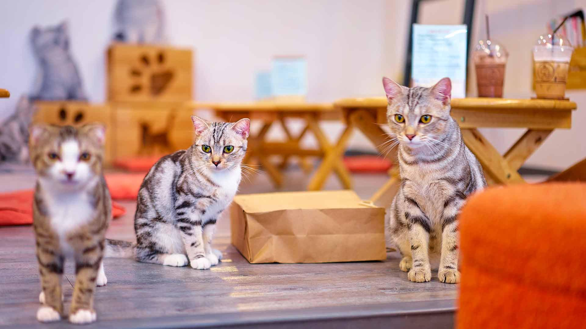 5 Cat Cafes In Tokyo The Purr Fect Companion Byfood