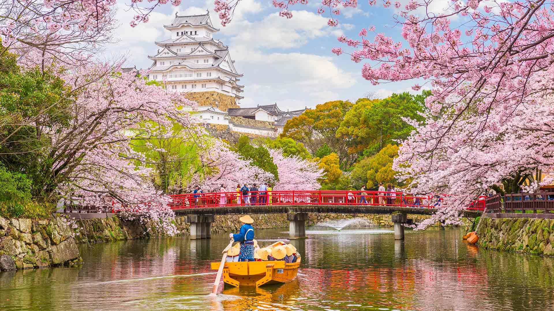 How To Celebrate Cherry Blossom Season In Japan Byfood